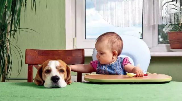 宝宝身体好,猫狗不可少.jpeg