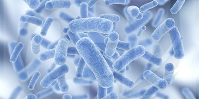 用微生物发酵食品,有营养意义吗? | 营养之声